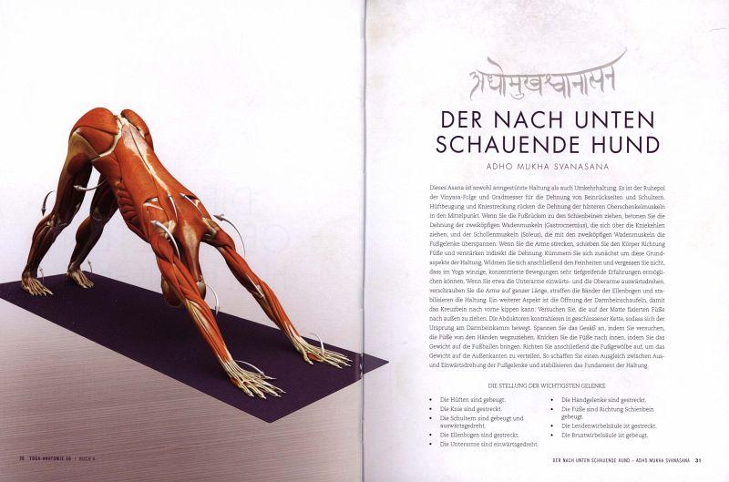 Yoga-Anatomie 3D. Armgestützte Haltungen und Umkehrhaltungen von Ray ...
