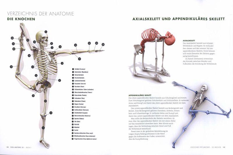 Yoga-Anatomie 3D. Rückbeugen und Drehhaltungen von Ray Long - Buch ...