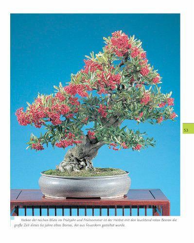 bonsai mit mein sch ner garten profi tipps faszination fernost von horst stahl helmut. Black Bedroom Furniture Sets. Home Design Ideas