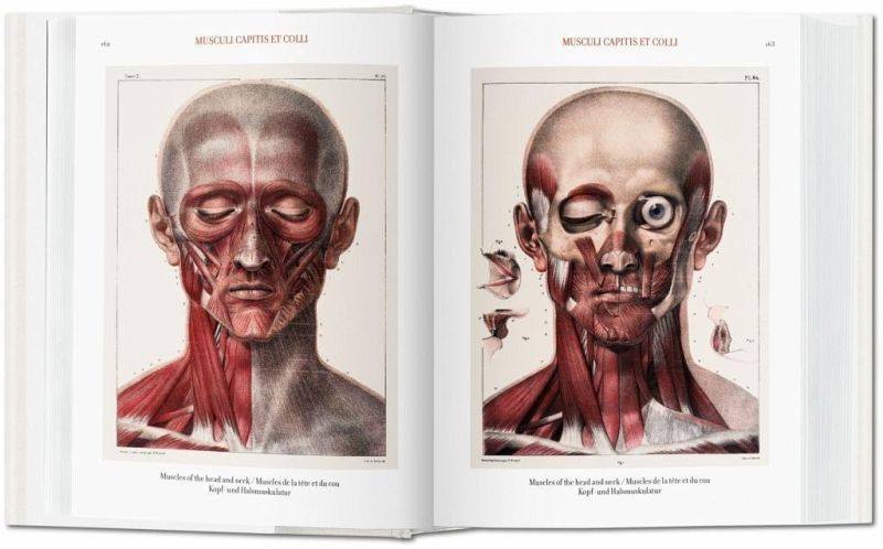 Bourgery. Atlas of Human Anatomy and Surgery von Jean Marc Bourgery ...