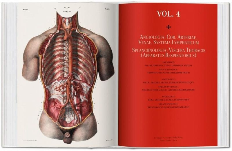 Bourgery Atlas Of Human Anatomy And Surgery Von Jean Marc Bourgery