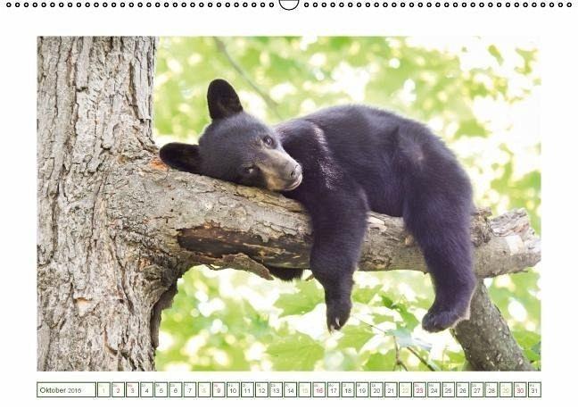Edition lustige Tiere: Die Bären sind los (Wandkalender 2016 DIN A2 ...