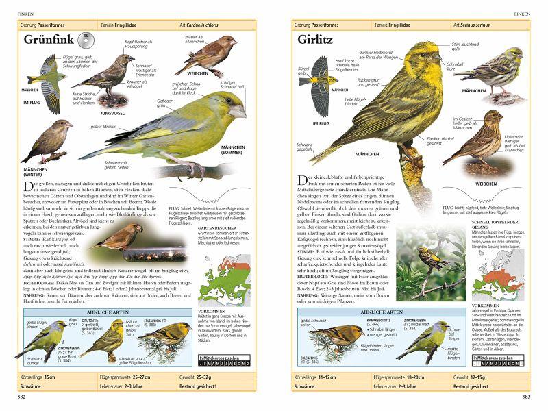 Vögel in Europa von Rob Hume - Buch - bücher.de