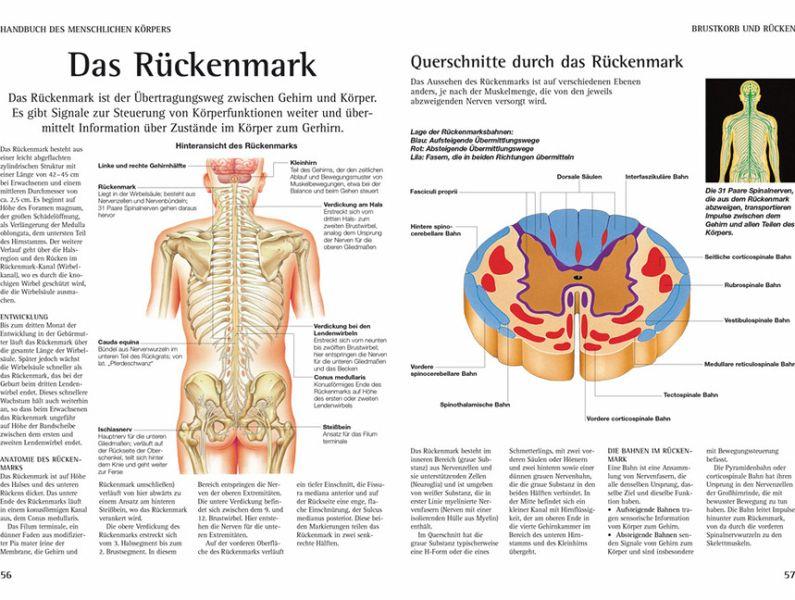 Handbuch des Menschlichen Körpers von Peter Abrahams - Fachbuch ...