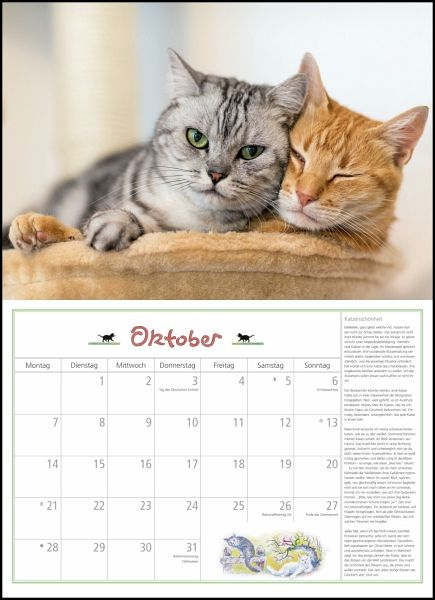 dumonts katzen kalender 2019 kalender portofrei bestellen. Black Bedroom Furniture Sets. Home Design Ideas