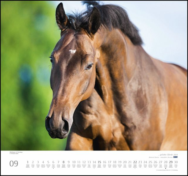 geliebte pferde 2019 kalender portofrei bestellen. Black Bedroom Furniture Sets. Home Design Ideas