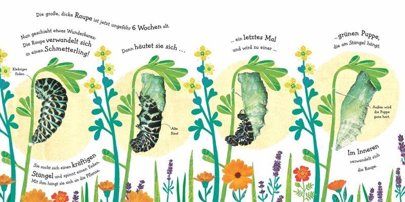 Wie wird die Raupe zum Schmetterling? portofrei bei bücher
